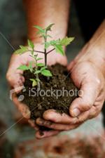Seedling cradled in hands